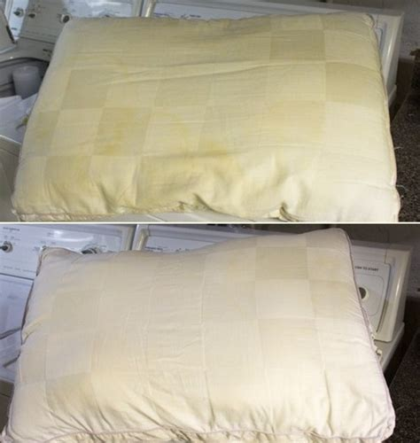 How To Take Stains Out Of A Mattress by How To Remove Urine And Sweat Stains Out Of Your Mattress Cleaningtutorials Net Your
