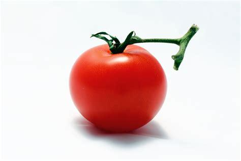 tomato color vermillion tomato colors photo 34537472 fanpop