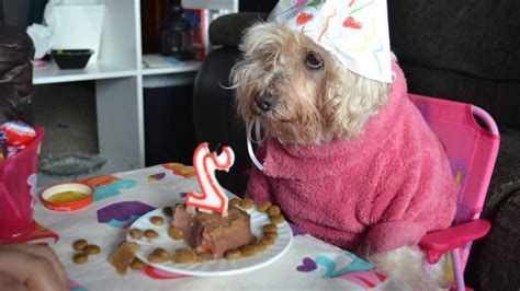 imagenes para una amiga perra cumplea 241 os chihuahua mi perro youtube