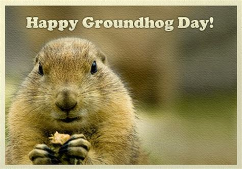 groundhog day facts a pop culture addict s guide to groundhog day facts