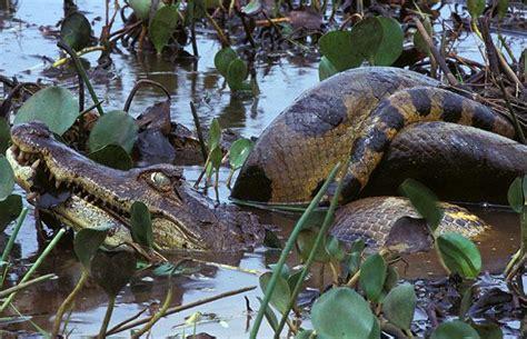 google wild poison snakes