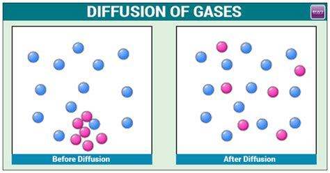 diffusion of gases important concepts formulas and exles