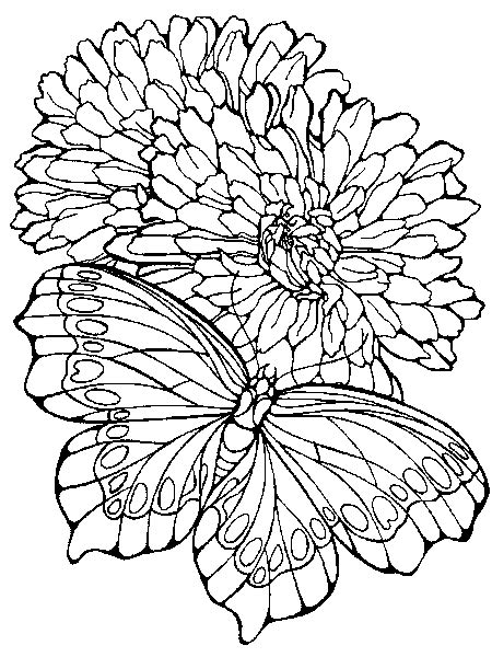 christian butterfly coloring pages butterfly butterfly coloring pages 118 coloring pages