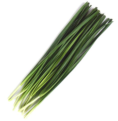 chive com chive definition what is