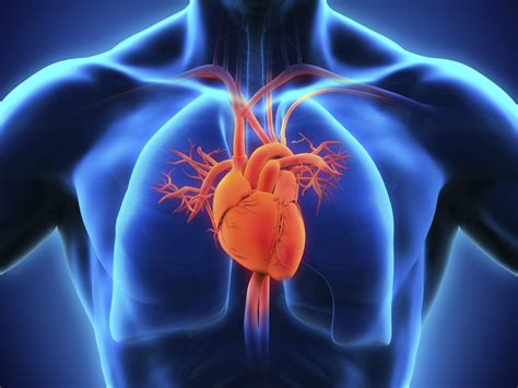 c protein cardiac should i get a c reactive protein test to check for