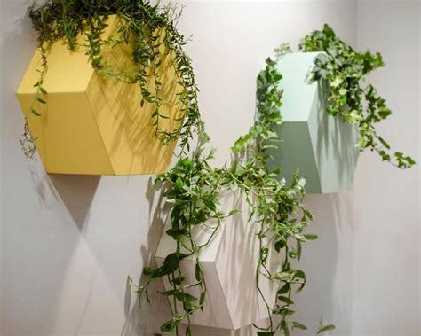 edera da appartamento ricanti piante da interno ricanti appartamento