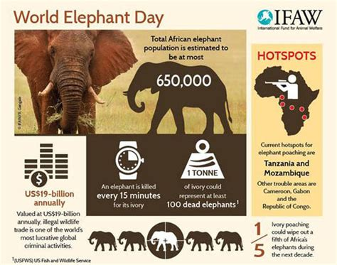 Elephants are still being slaughtered at an alarming rate ...