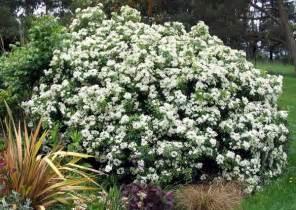 Flowering Garden Shrubs Shrubs
