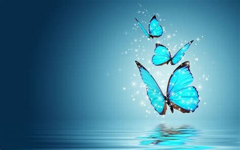blue butterfly morpho water reflection hd wallpapers