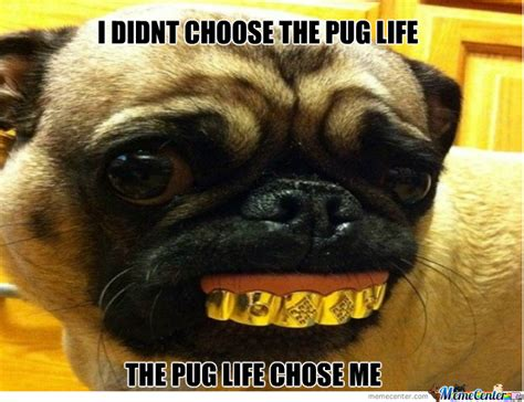 Pug Birthday Meme - happy pug meme gallery