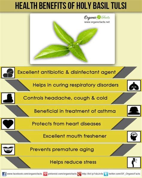 Holy Detox Tea Benefits by 17 Best Ideas About Basil Health Benefits On