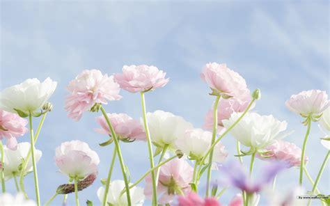 wallpaper sweet flower cool sweet pink flower hd wallpaper 9511 12428 wallpaper