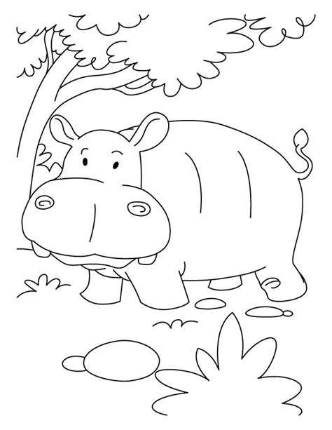 hippopotamus in jumgle coloring pages download free