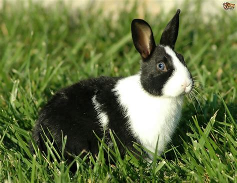 breeds for 5 of the best rabbit breeds for children pets4homes