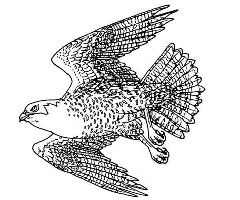 Peregrine Falcon Coloring Page peregrine falcon coloring page