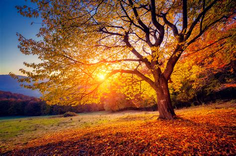 Get Ready For Autumn Fall 6 To Get You Ready For Fall Nextadvisor