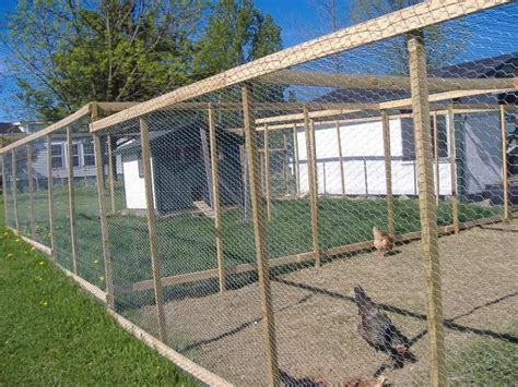 Backyard Chicken Run Chicken Run How Backyard Chickens