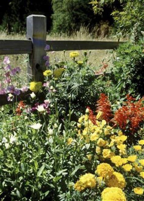 Best Fertilizer For Flower Garden The Best Way To Fertilize Established Flower Beds Home Guides Sf Gate