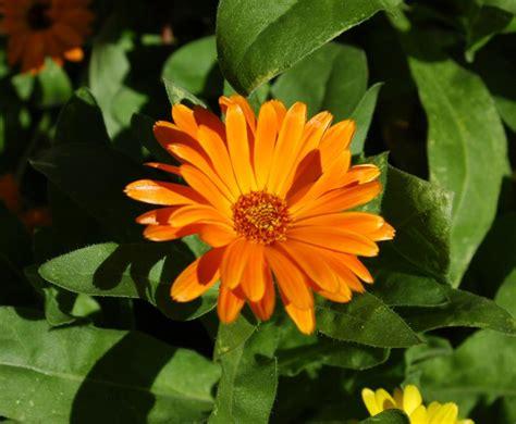 november flowers flower for november 28 images best 25 november birth
