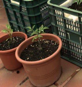 coltivare in vaso consigli per coltivare ortaggi in vaso