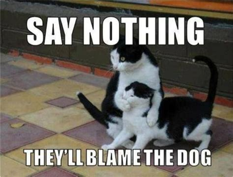 Sneaky Cat Meme - cats are sneaky things that make me smile pinterest
