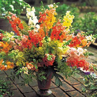 Bibit Benih Seeds Snapdragon Mix Bouquet Flower 105 best images about snapdragons arrangement on tutorial flower and