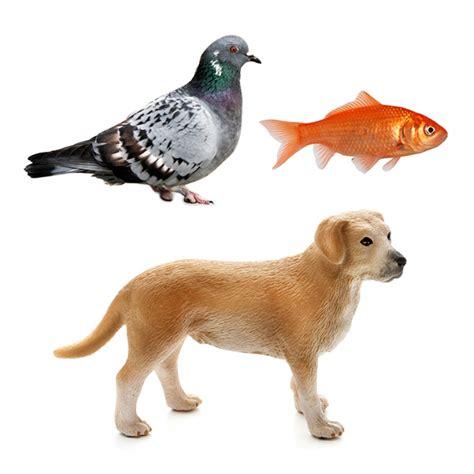 imagenes de animales llaneros animales cos sem 225 nticos soyvisual