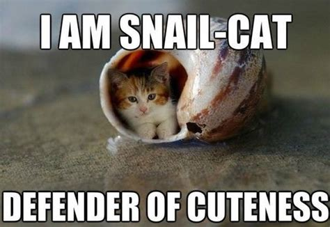 Adorable Meme - adorable cat memes image memes at relatably com