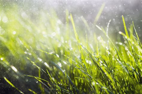 reasons  mowing wet grass   bad idea