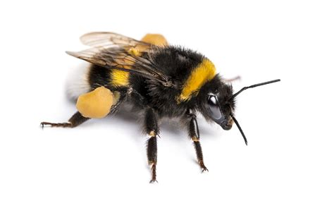 Bee Control - Bee Removal & Bee Killer - Spray, Repellent ...