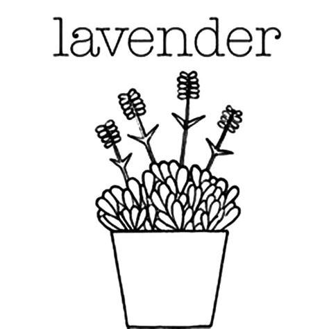 lavender flower coloring page lavender coloring page lavender flower coloring page