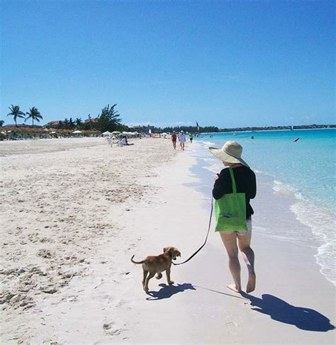 places where you can play with puppies puppy island a place in the caribbean where you can play and adopt puppies top13
