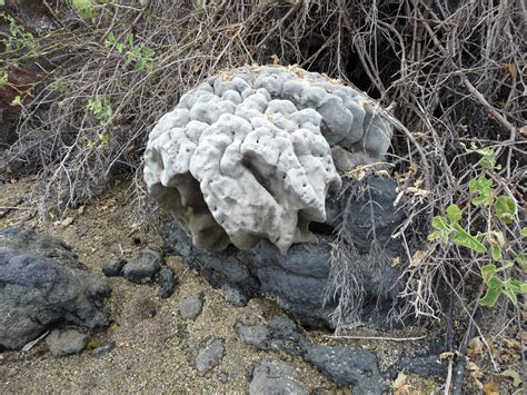 reading the rocks how geologists discovered the secret of books rondam ramblings travelogue galapagos geology