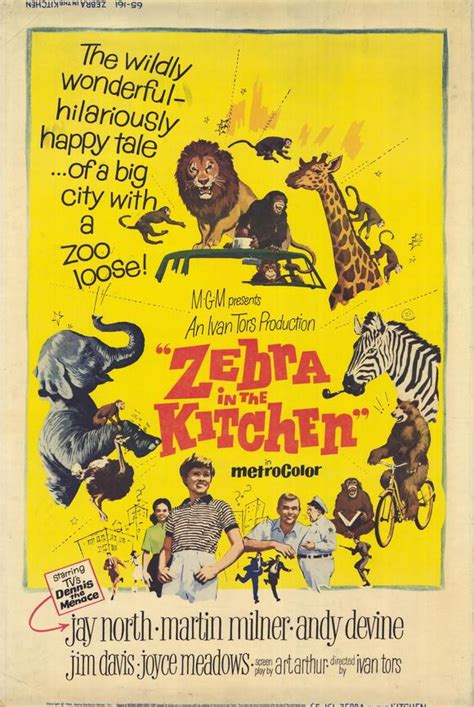 Zebra In The Kitchen by Zebra In The Kitchen Posters From Poster Shop