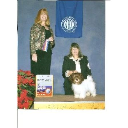 mt havanese mt havanese breeder in palmerton pennsylvania listing id 12642