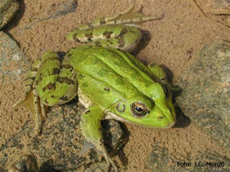 Imagenes Animales Anfibios | anfibios diario animales