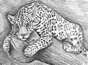 how to draw a jaguar finalprodigy com