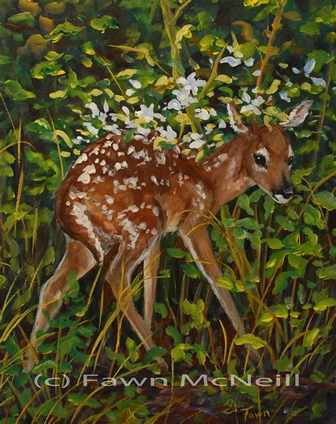 Deer Feeders Near Me Fawn S Paintings New Fawn Wildlife Fawn Hiding In Flowers