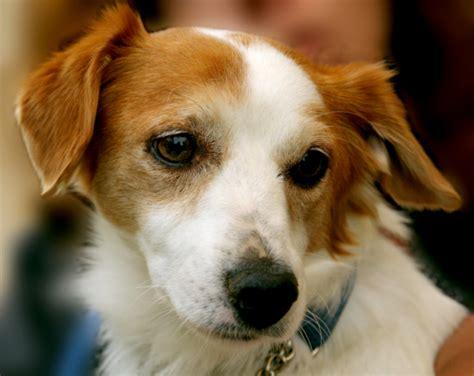 ear flush for dogs dogcare