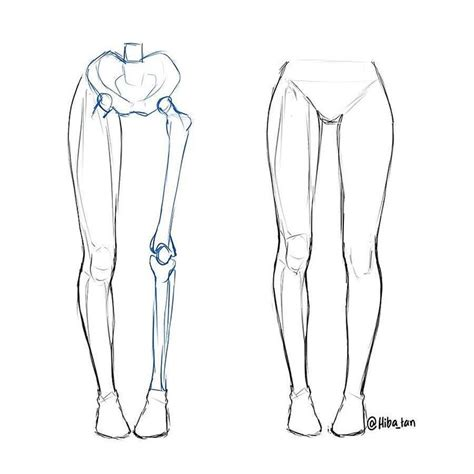 Drawing Legs by Best 25 Leg Anatomy Ideas On Reference