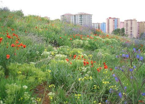 House Design Inside Garden Urban Landscape Design And Biodiversity Intechopen