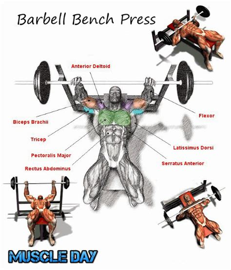 bench press workout chest exercises barbell bench press muscle day