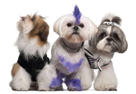 Pet Shedding by Piercing Para C 227 Es Acess 243 Vira Febre Em Pet Shops