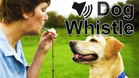 high pitch sound for dogs maxresdefault jpg