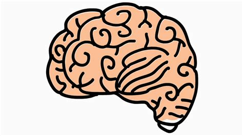 brain clipart transparent background pencil and in color