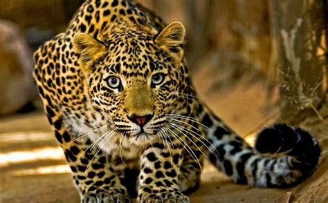 film ular derik 25 hewan paling berbahaya dan mematikan di dunia vebma com