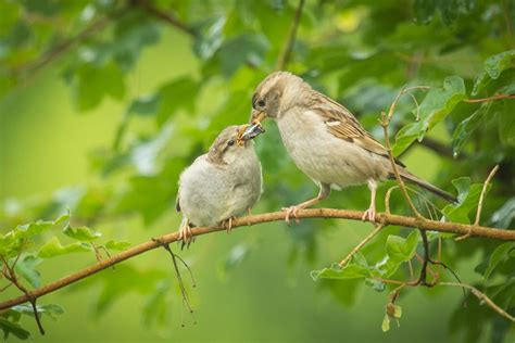 mother nature s bird feeding news summer bird feeding tips