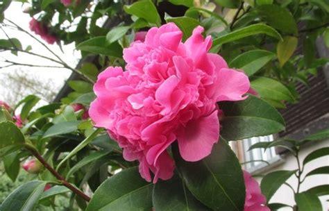 fiori lugano prodotti per animali agricoltura e consorzi fiori e piante