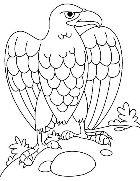 coloring page harpy eagle harpy eagle coloring page coloring coloring pages