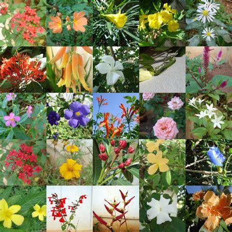 types of garden plants and flowers flowers flower types
